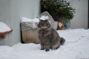 Gandalf e la neve
