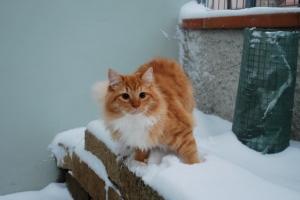 Isildur e la neve